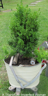 Fantastic Vintage Mop Bucket with Wringer filled with bush and ferns.