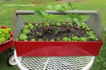Red Toolbox with Strawberry Plants and Hens & Chicks
