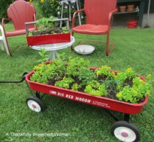 Red Wagon filled with herbs and sedum, Red Metal Toolbox with strawberry plants and hens & chicks.