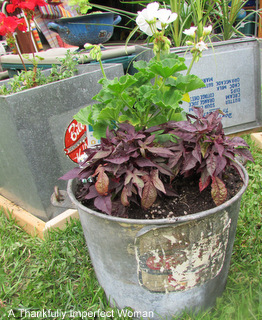 Fantastic Galvanized Metal Bucket with label and flowers