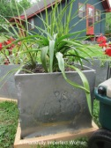 Fantastic Milk Cooler w/ writing on the lid: Don't Forget Milk, Butter, etc... planted with Calla and Spikes.